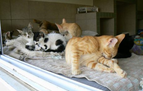 מבצע עיקור וסירוס חתולים חסרי בית בלוד